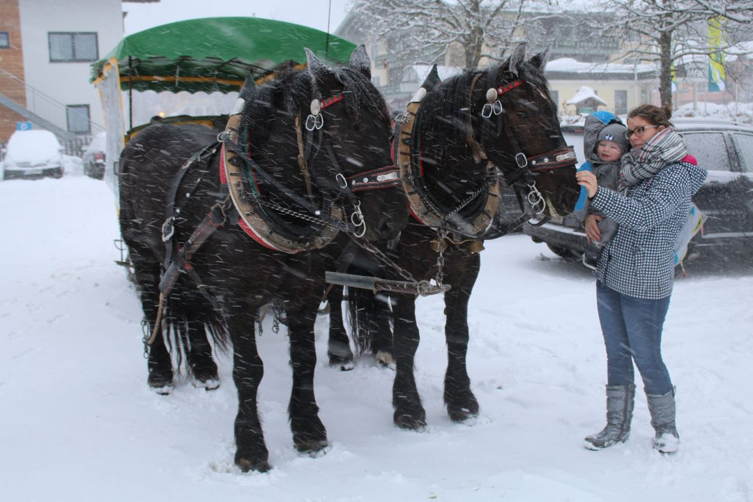 paardenslee